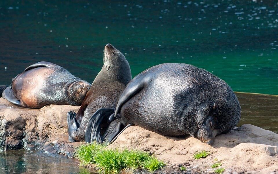 Wygrzewające się na Słońcu foki w fokarium na Helu.