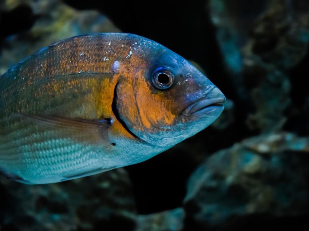 Akwarium pełne ryb