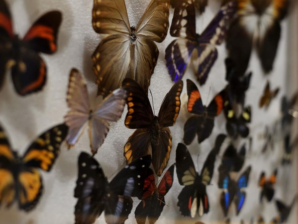 Muzeum motyli we Władysławowie.