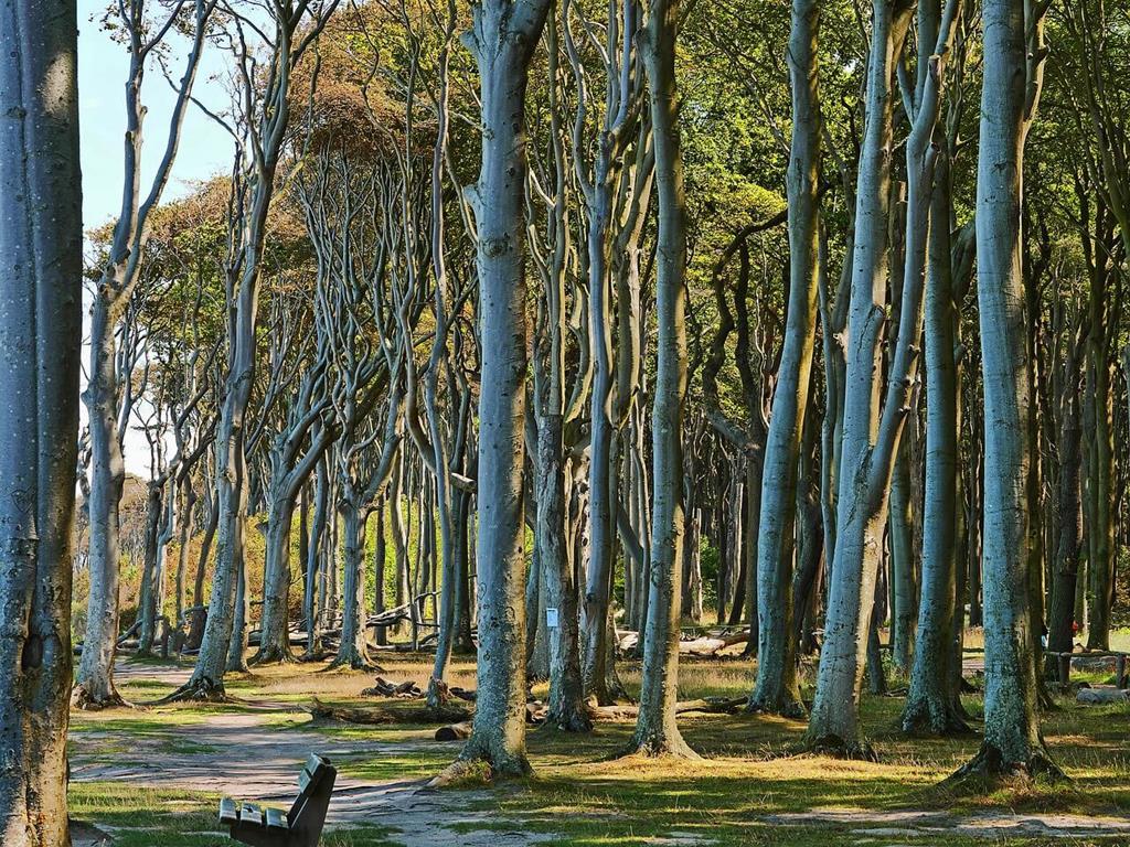 Piękny las w Jastarnii.